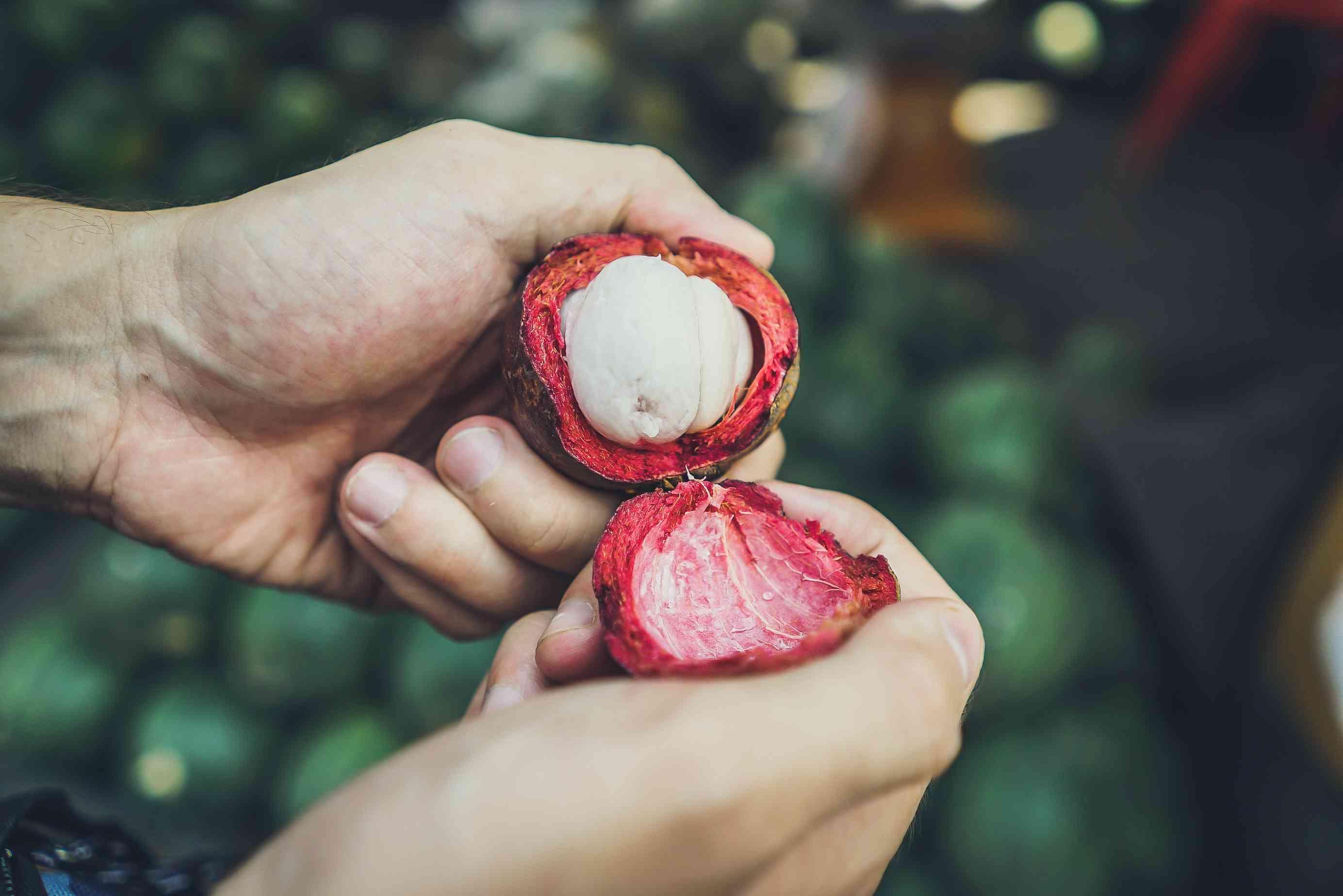 10 Manfaat Kulit Manggis Bagi Kesehatan