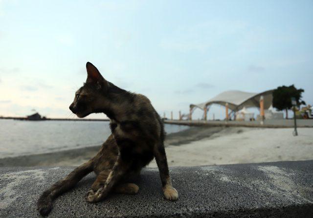 Viral Video Kucing Freezing, Ini Penjelasan Dokter Hewan 2